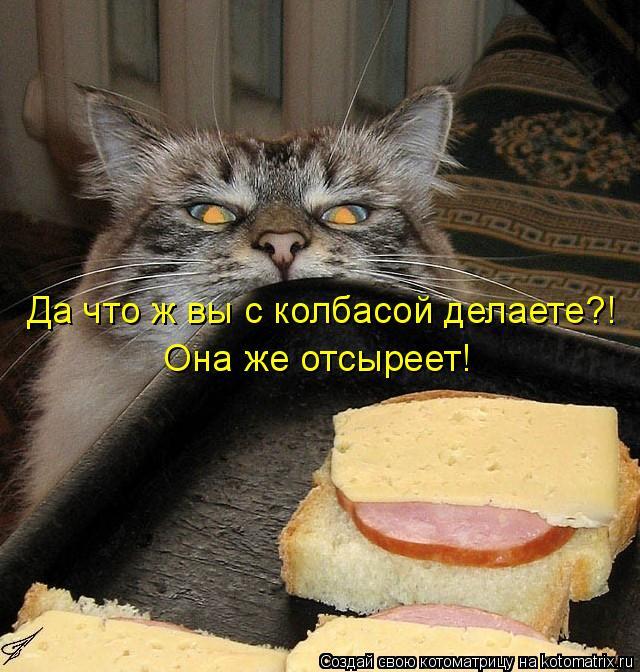 Котоматрица - Да что ж вы с колбасой делаете?! Она же отсыреет!