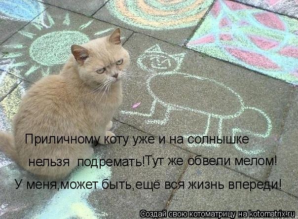 Котоматрица - Приличному коту уже и на солнышке  нельзя  подремать! Тут же обвели ме