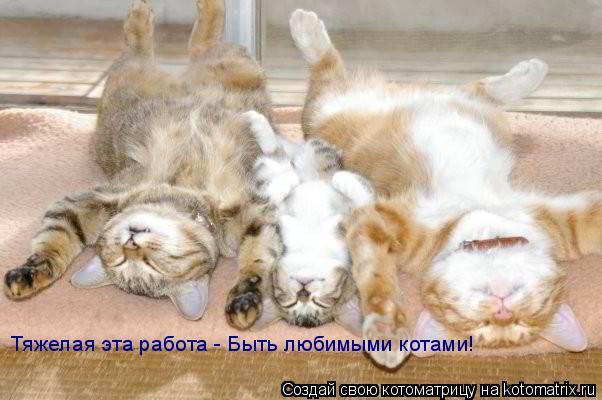 Котоматрица: Тяжелая эта работа - Быть любимыми котами!