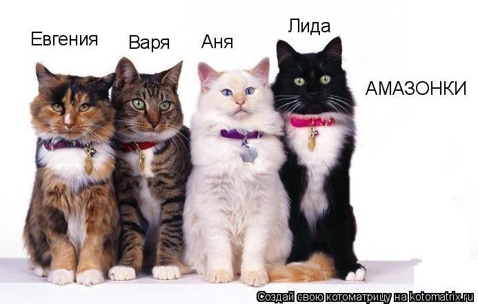Котоматрица: Аня Евгения Лида Варя АМАЗОНКИ