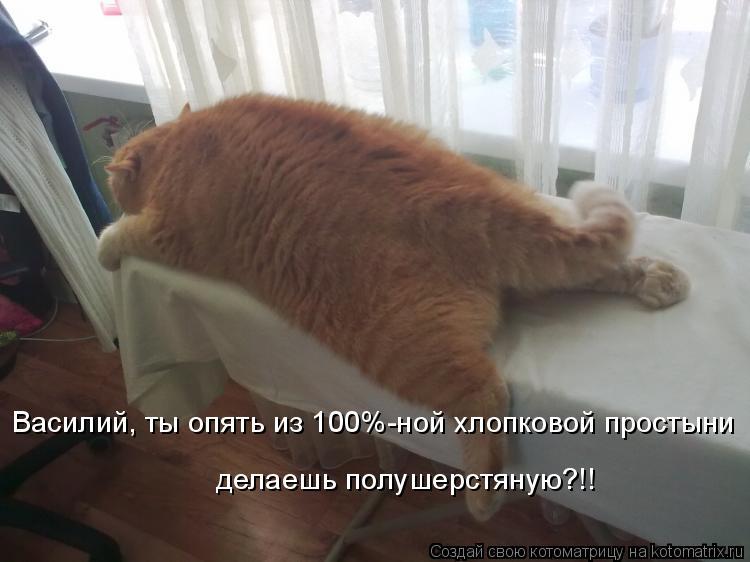 Котоматрица - Василий, ты опять из 100%-ной хлопковой простыни  делаешь полушерстяну