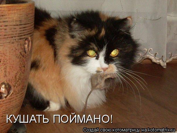 Котоматрица - КУШАТЬ ПОЙМАНО!