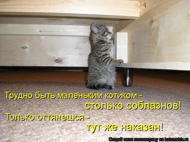 Котоматрица: Трудно быть маленьким котиком - столько соблазнов! Только оттянешся -  тут же наказан!