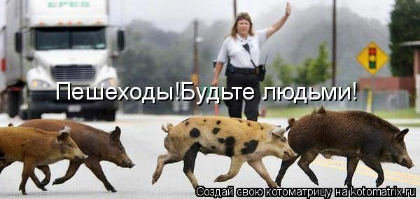 Котоматрица: Пешеходы!Будьте людьми!