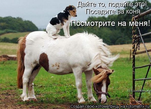 Котоматрица: Дайте то, подайте это! Посадите на коня. Посмотрите на меня!