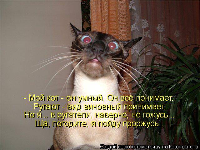 Котоматрица: - Мой кот - он умный. Он всё понимает. Ругают - вид виновный принимает... Ща, погодите, я пойду проржусь... Но я... в ругатели, наверно, не гожусь...