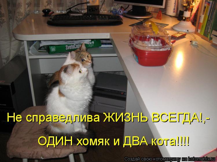 Котоматрица - Не справедлива ЖИЗНЬ ВСЕГДА!,- ОДИН хомяк и ДВА кота!!!!