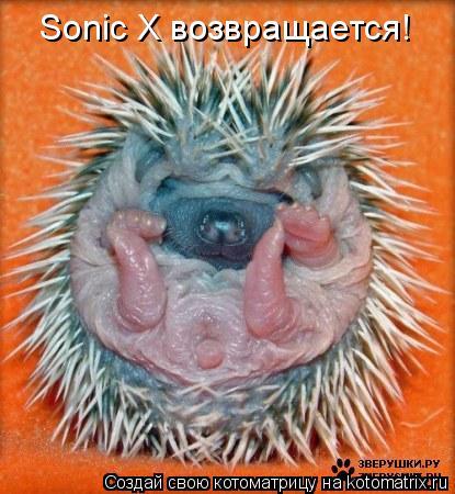 Котоматрица: Sonic X возвращается!