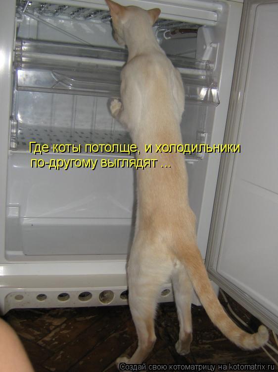 Котоматрица: Где коты потолще, и холодильники по-другому выглядят ...