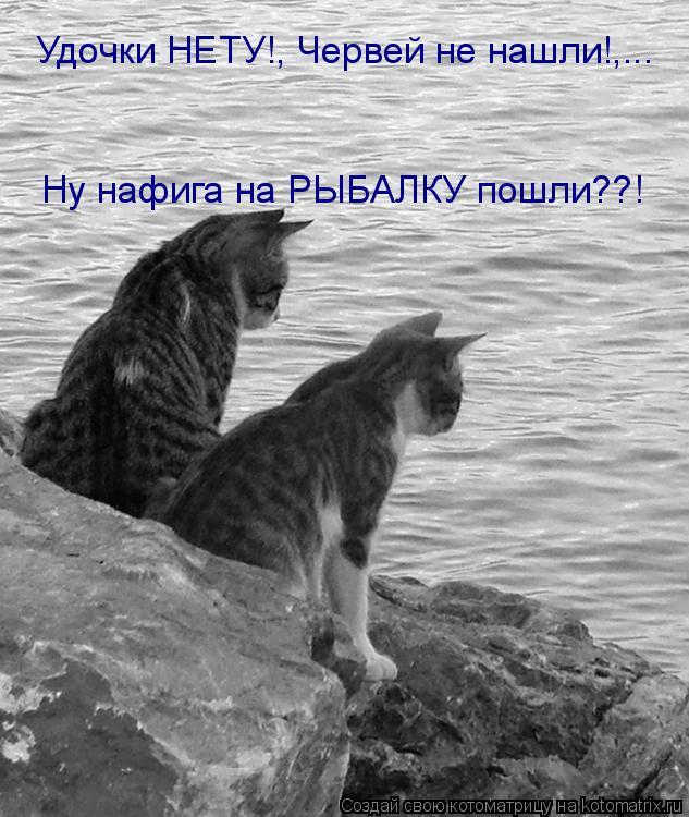 Котоматрица: Удочки НЕТУ!, Червей не нашли!,... Ну нафига на РЫБАЛКУ пошли??!