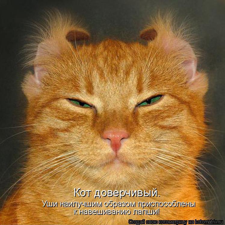 Котоматрица - Кот доверчивый.  Уши наилучшим образом приспособлены  к навешиванию ла