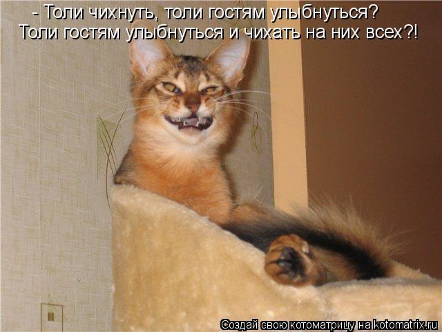 Котоматрица - - Толи чихнуть, толи гостям улыбнуться? Толи гостям улыбнуться и чихат