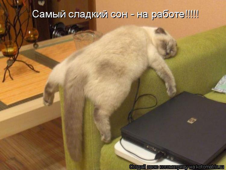 Котоматрица: Самый сладкий сон - на работе!!!!!