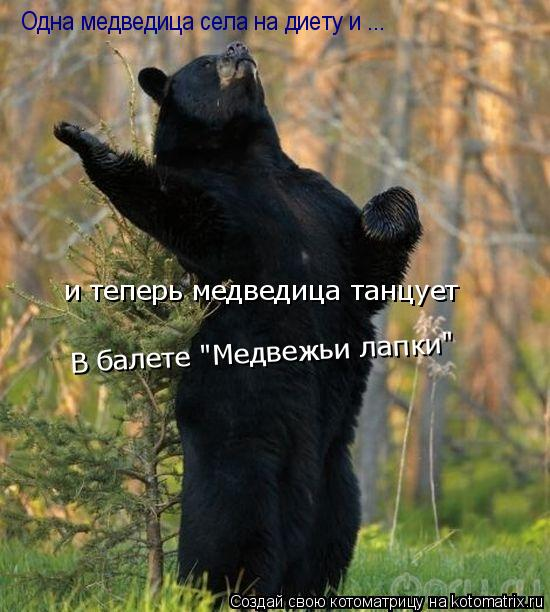 "Котоматрица: Одна медведица села на диету и ... и теперь медведица танцует В балете ""Медвежьи лапки"""