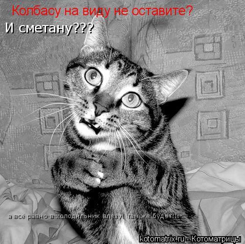 Котоматрица: Колбасу на виду не оставите? И сметану??? а всё равно в холодильник влезу! там же будет!!!