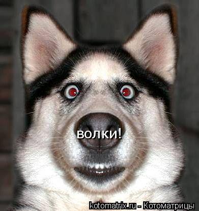 Котоматрица: волки!