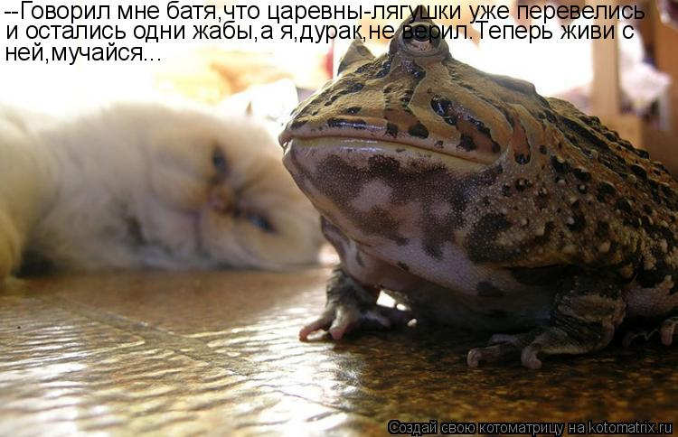 http://kotomatrix.ru/images/lolz/2011/07/07/946181.jpg