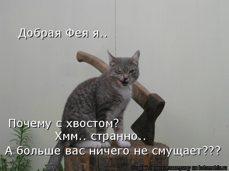 Котоматрица - Добрая Фея я.. Почему с хвостом?  Хмм.. странно..  А больше вас ничего