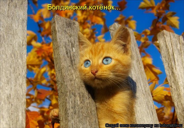Котоматрица: Болдинский котёнок...