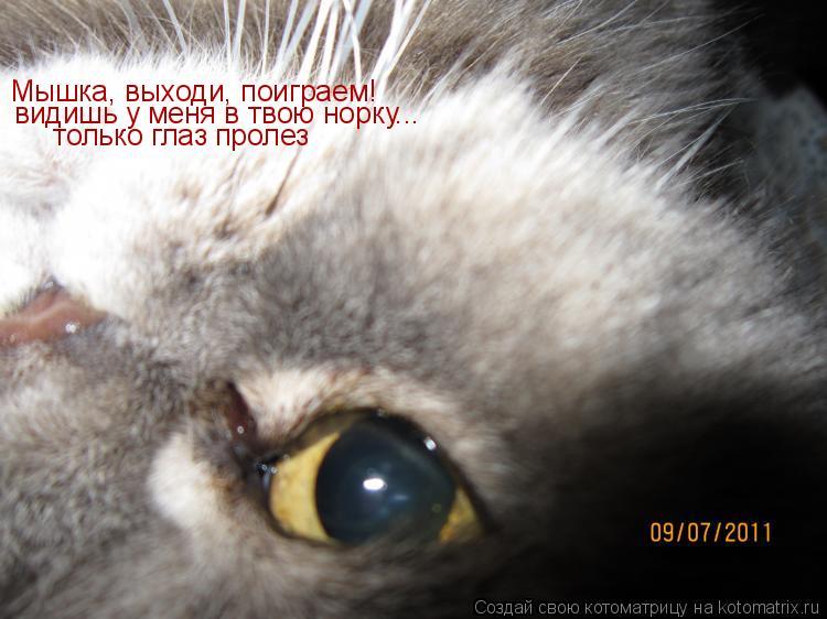 Котоматрица: Мышка, выходи, поиграем! видишь у меня в твою норку...  только глаз пролез
