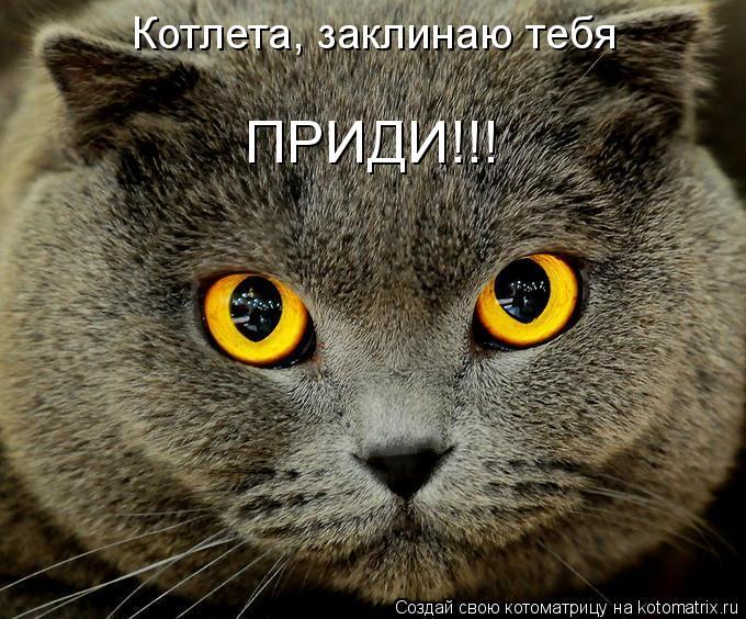 Котоматрица: Котлета, заклинаю тебя ПРИДИ!!!