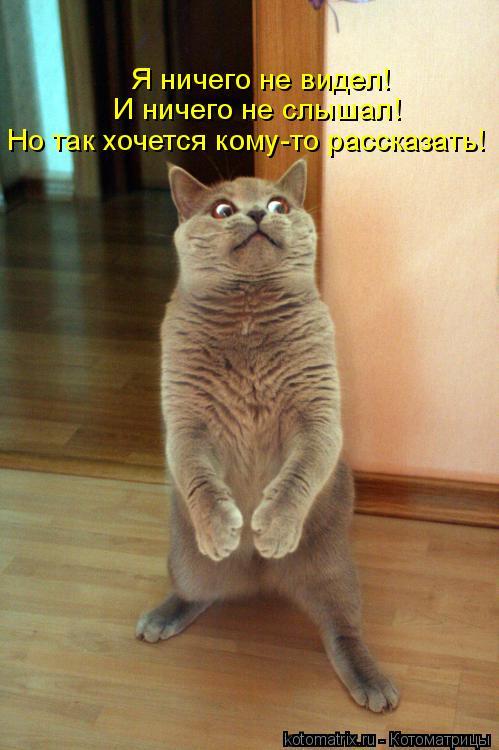 Котоматрица: Но так хочется кому-то рассказать! И ничего не слышал! Я ничего не видел!