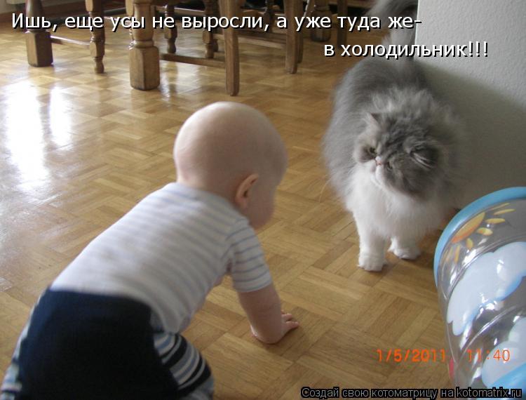 Котоматрица - Ишь, еще усы не выросли, а уже туда же- в холодильник!!!