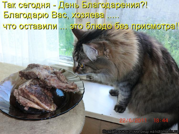 Котоматрица - Благодарю Вас, хозяева ..... Так сегодня - День Благодарения?! что ост