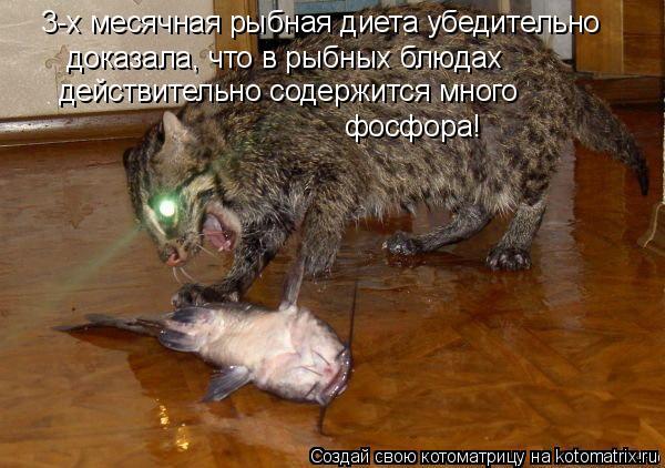 Котоматрица - 3-х месячная рыбная диета убедительно  доказала, что в рыбных блюдах