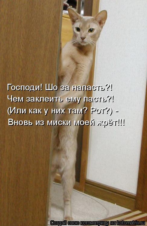 Котоматриця!)))) - Страница 7 947552