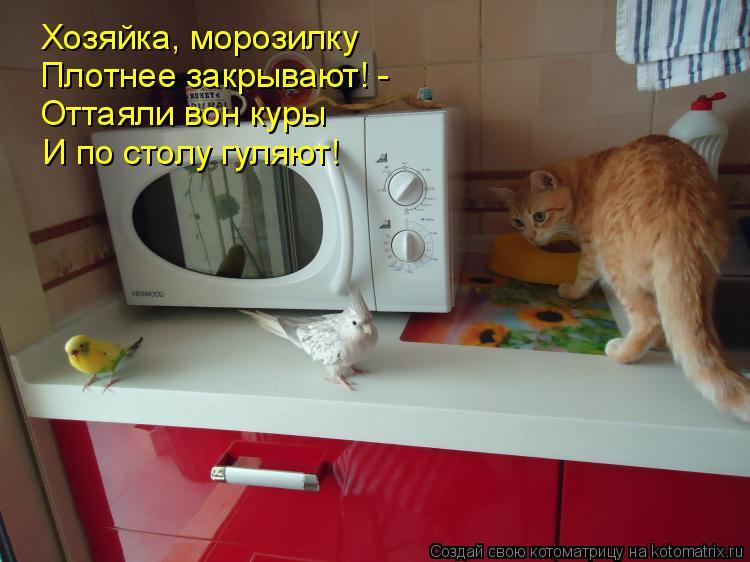 Котоматрица: Хозяйка, морозилку Плотнее закрывают! -  Оттаяли вон куры И по столу гуляют!