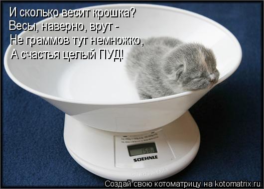 Котоматрица: И сколько весит крошка? Весы, наверно, врут - Не граммов тут немножко, А счастья целый ПУД!