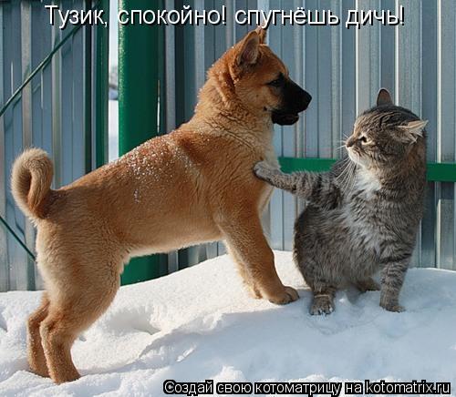Котоматрица: Тузик, спокойно! спугнёшь дичь!