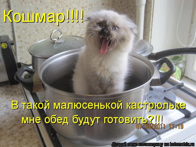 Котоматрица: Кошмар!!!! В такой малюсенькой кастрюльке  мне обед будут готовить?!!!