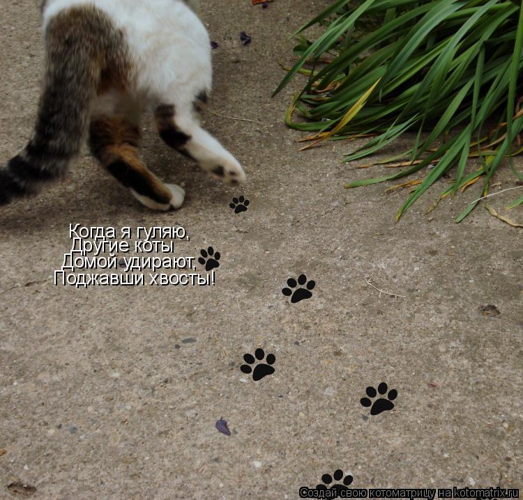 Котоматрица: Когда я гуляю, Другие коты Домой удирают, Поджавши хвосты!