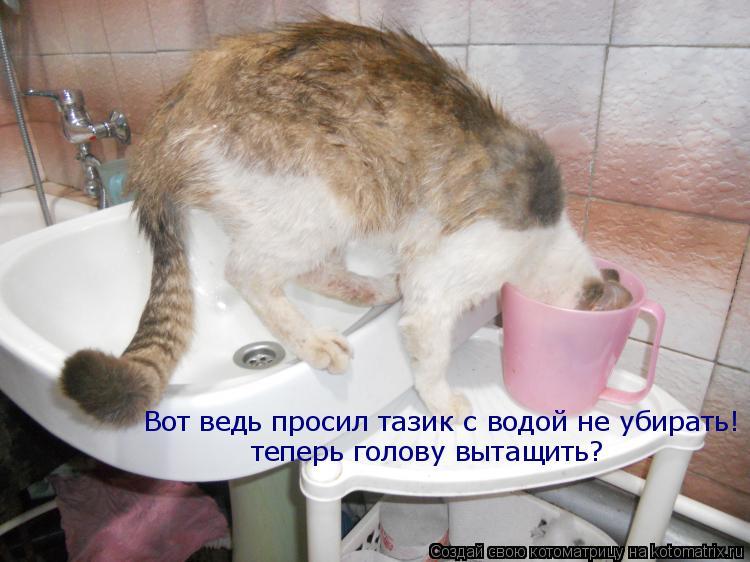 Котоматрица: Вот ведь просил тазик с водой не убирать! теперь голову вытащить?