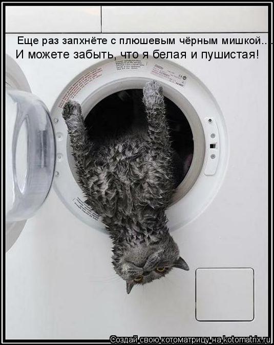 Котоматрица: Еще раз запхнёте с плюшевым чёрным мишкой.... И можете забыть, что я белая и пушистая!