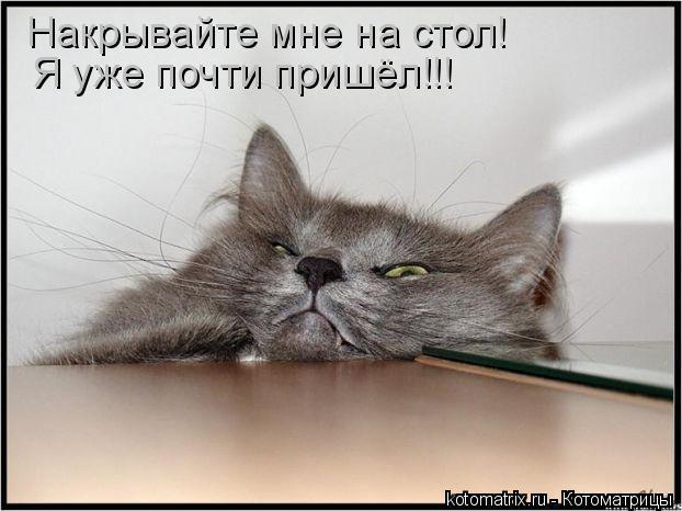 Котоматрица - Накрывайте мне на стол! Я уже почти пришёл!!!