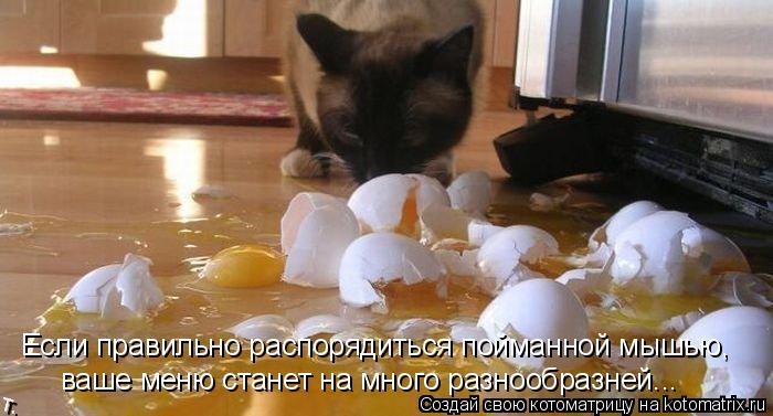 Котоматрица - Если правильно распорядиться пойманной мышью, ваше меню станет на мног