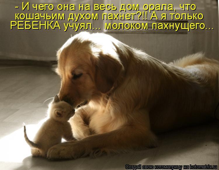 Котоматрица - - И чего она на весь дом орала, что кошачьим духом пахнет?!! А я тольк