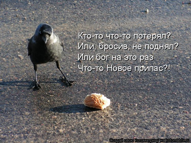 Котоматрица: Или бог на это раз  Что-то Новое припас?! Или, бросив, не поднял? Кто-то что-то потерял?