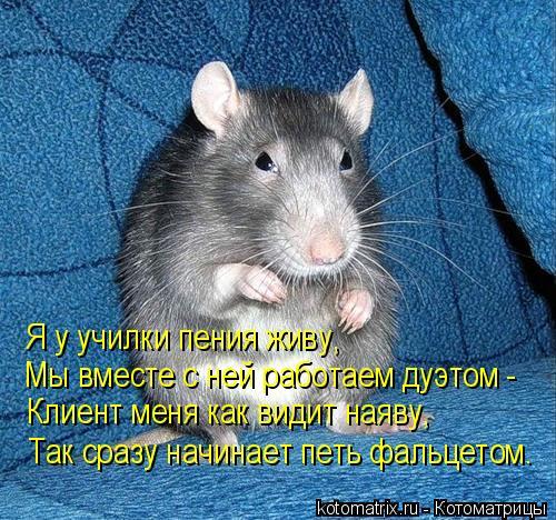 Котоматриця!)))) - Страница 7 948804