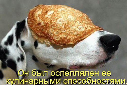 Котоматрица: кулинарными способностями. Он был ослеплялен ее
