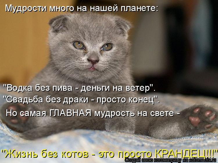 Котоматрица - Мудрости много на нашей планете: