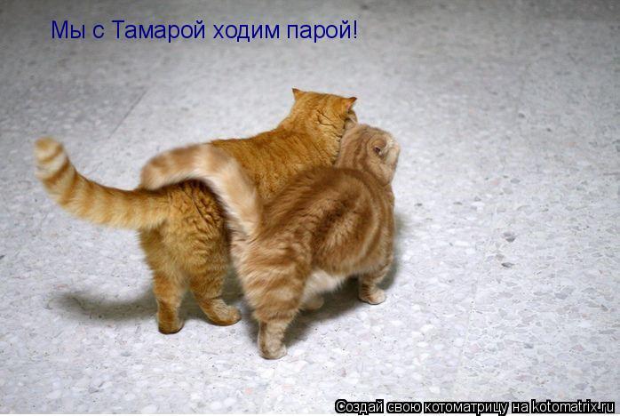 Котоматрица: Мы с Тамарой ходим парой!