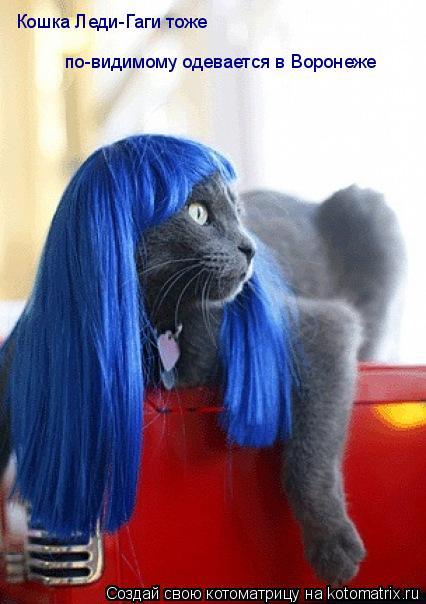Котоматрица: Кошка Леди-Гаги тоже  по-видимому одевается в Воронеже