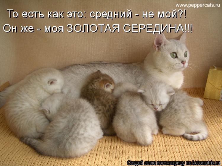 Котоматрица - То есть как это: средний - не мой?! Он же - моя ЗОЛОТАЯ СЕРЕДИНА!!!