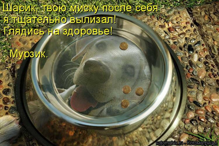 Котоматрица - Шарик, твою миску после себя я тщательно вылизал! Глядись на здоровье!