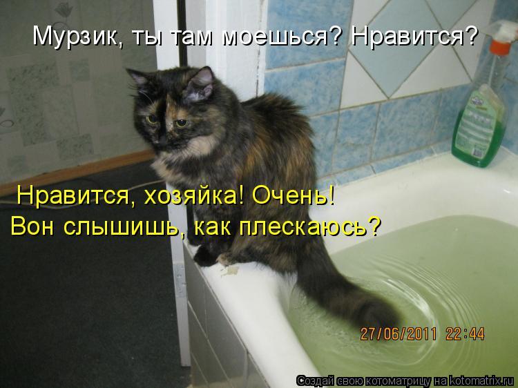 Котоматрица - Мурзик, ты там моешься? Нравится? Нравится, хозяйка! Очень! Вон слышиш