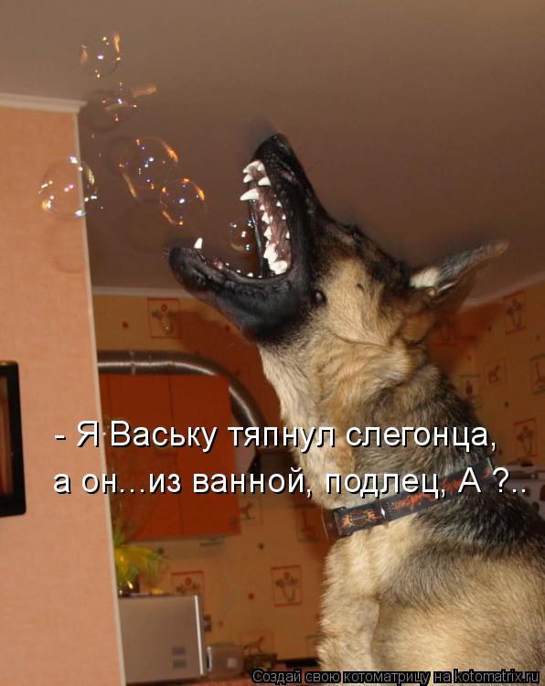 Котоматрица: - Я Ваську тяпнул слегонца, а он...из ванной, подлец, А ?..